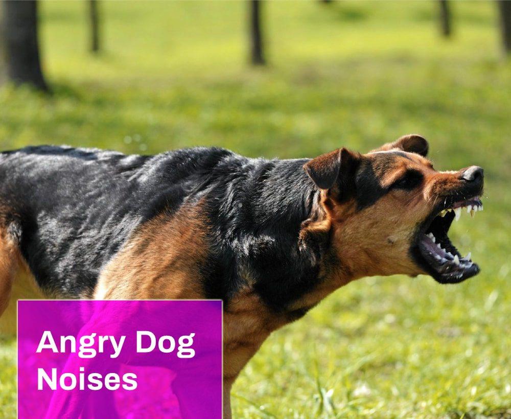 Angry Dog Noises
