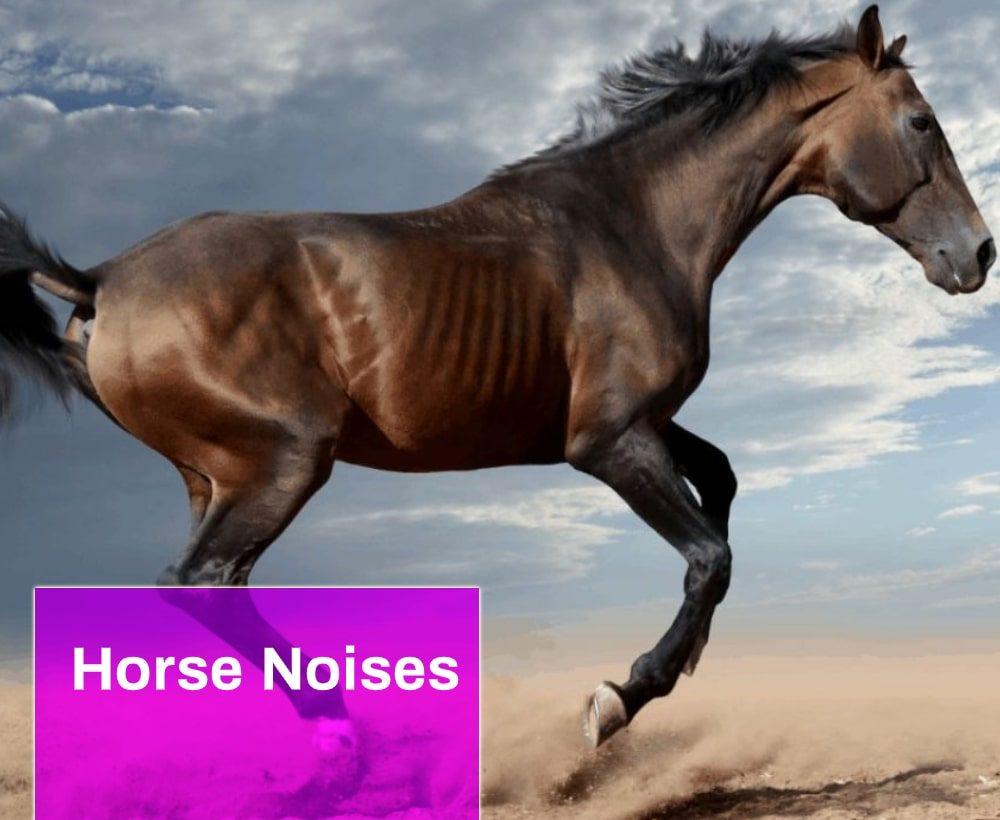 Horse Noises