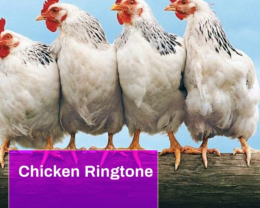 Chicken Ringtone