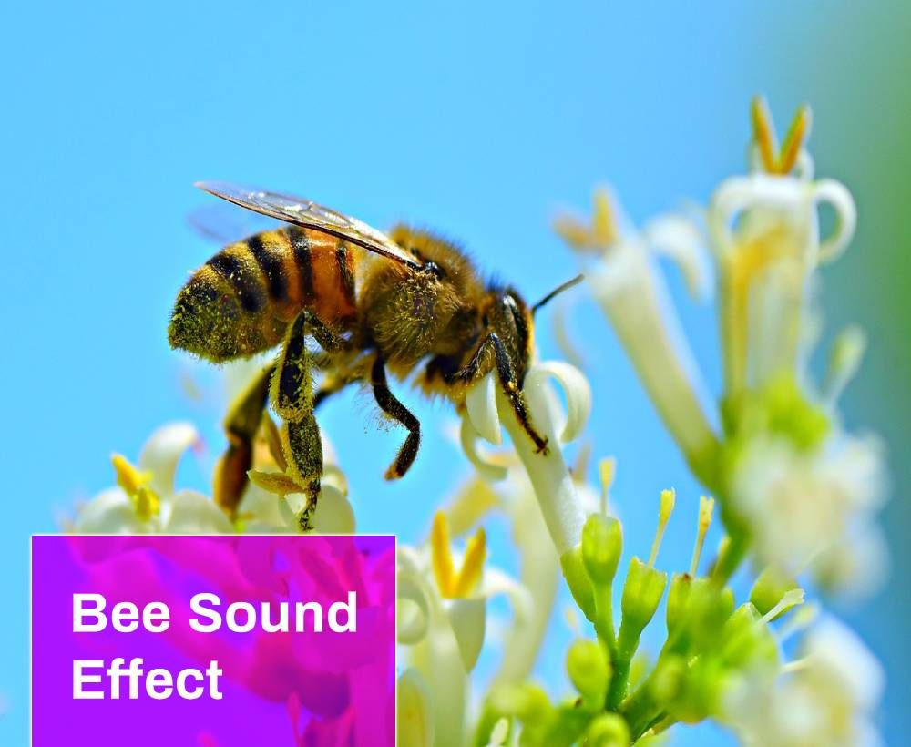 Bee Sound Effect