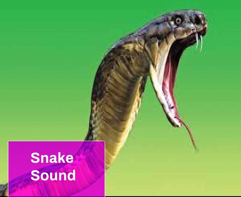 Snake Sound