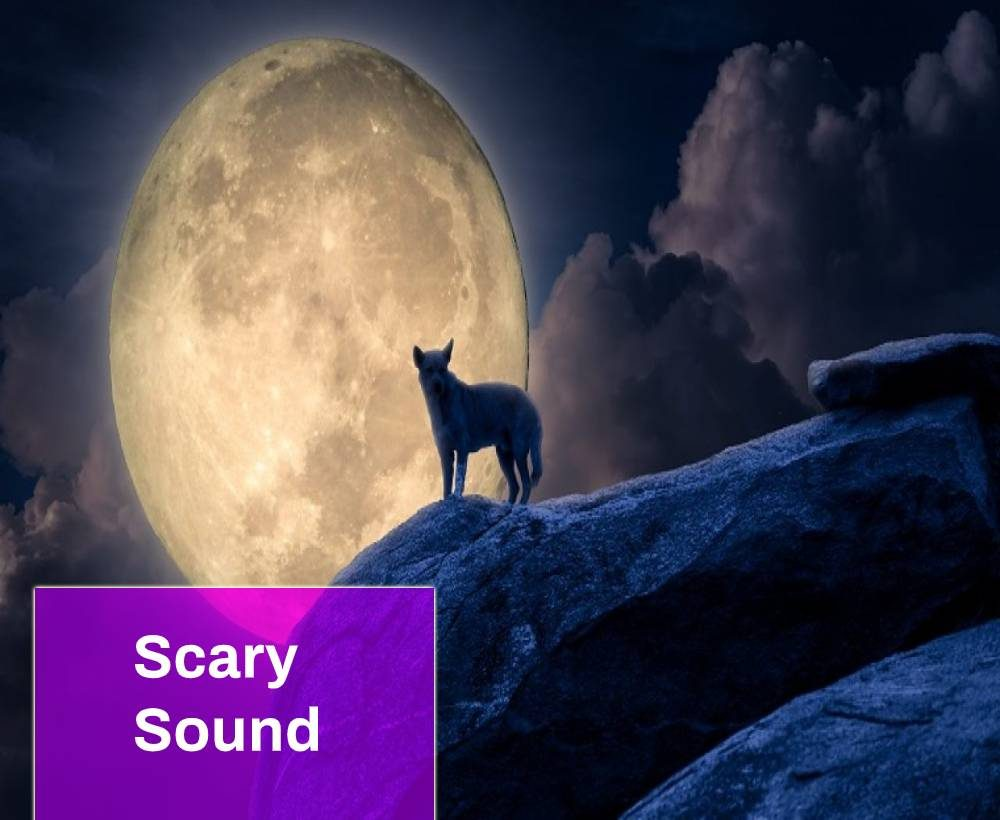 Dog Howling Sound