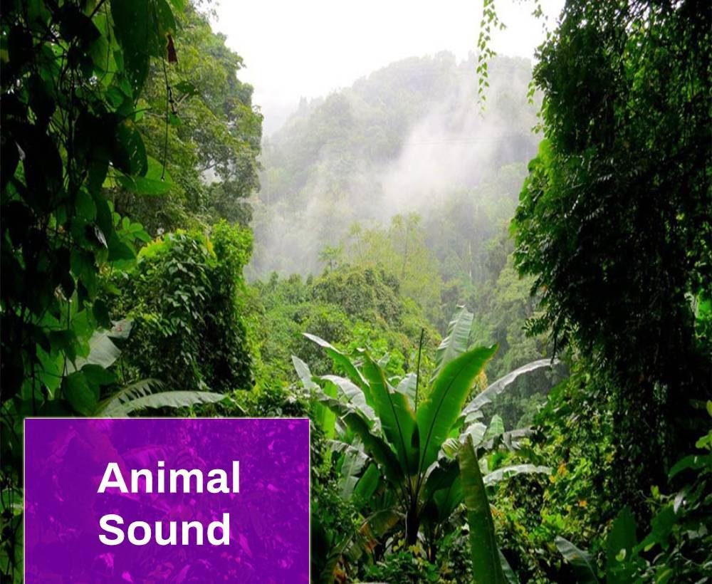 Jungle Sound