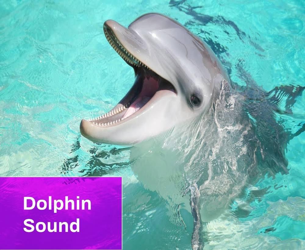 Dolphin Sound