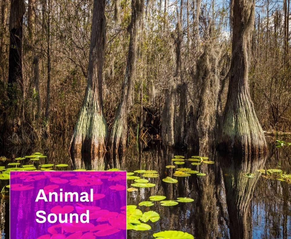 Water Swamp