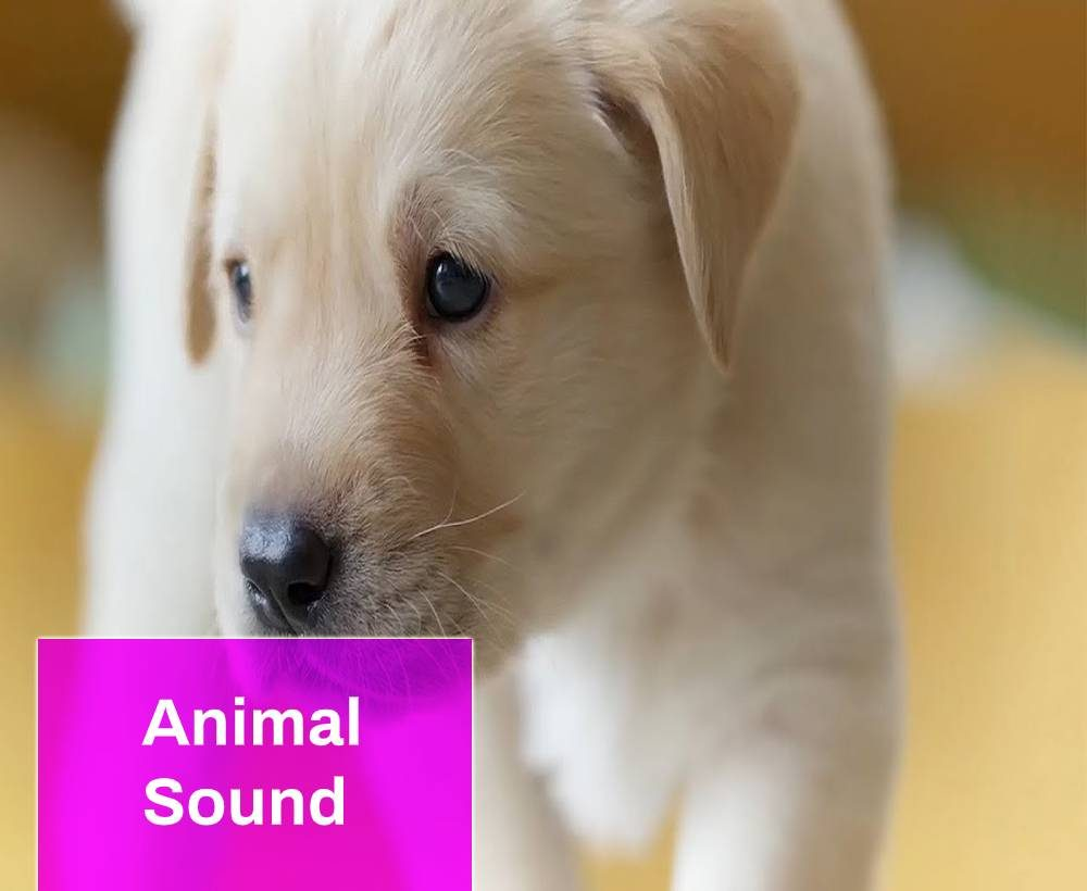 Animal Sound Free Mp3 Download Mingo Sounds