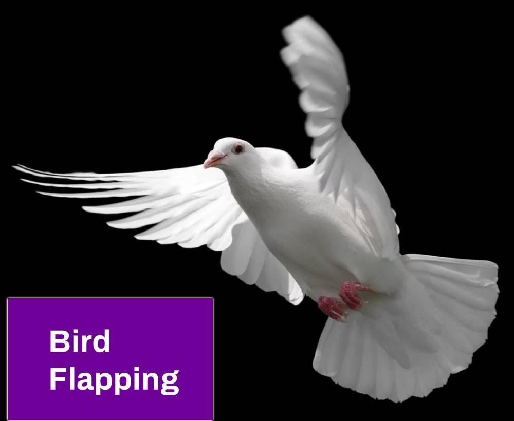 Bird Flapping