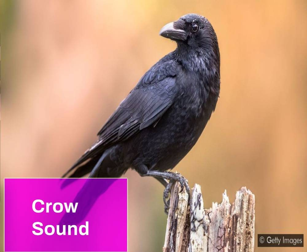 Crow Sound