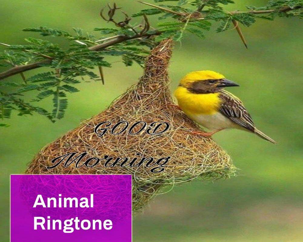 btrd ringtone