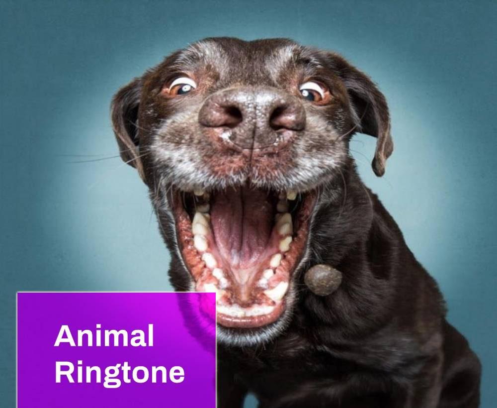 Dog Laughter Ringtone