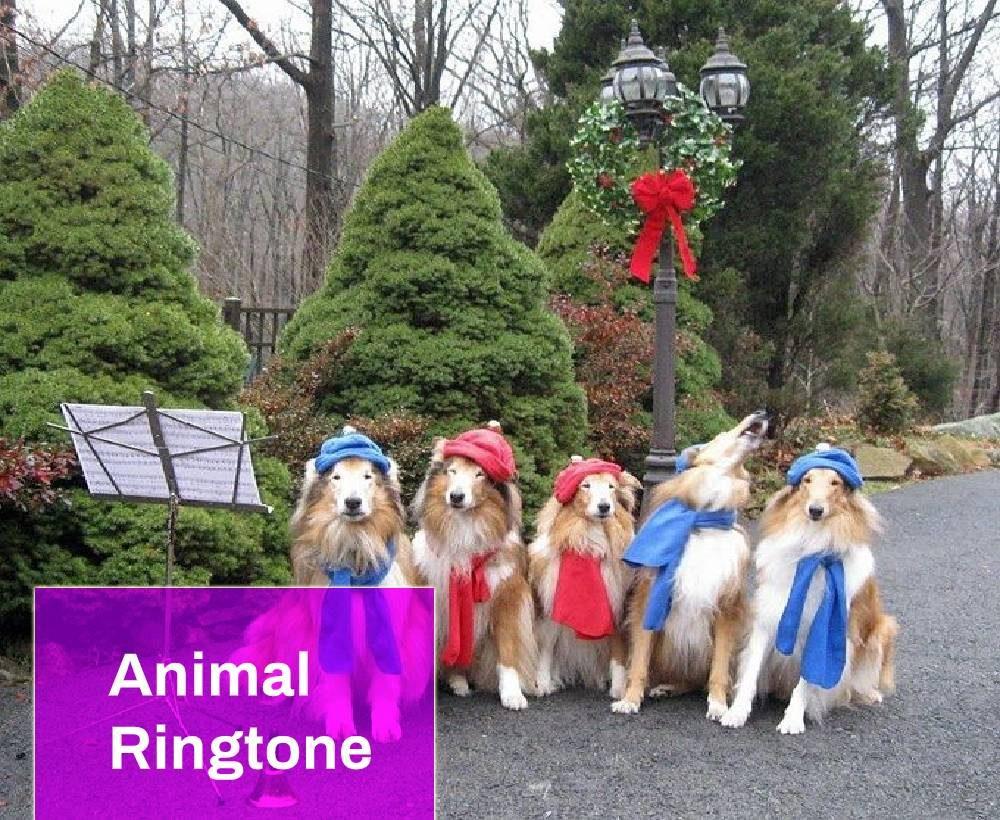 dog choir