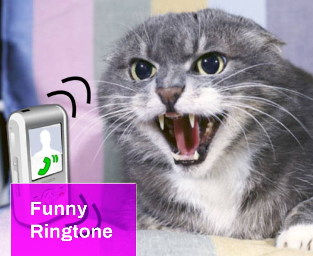 Message Message Message Funny Ringtone