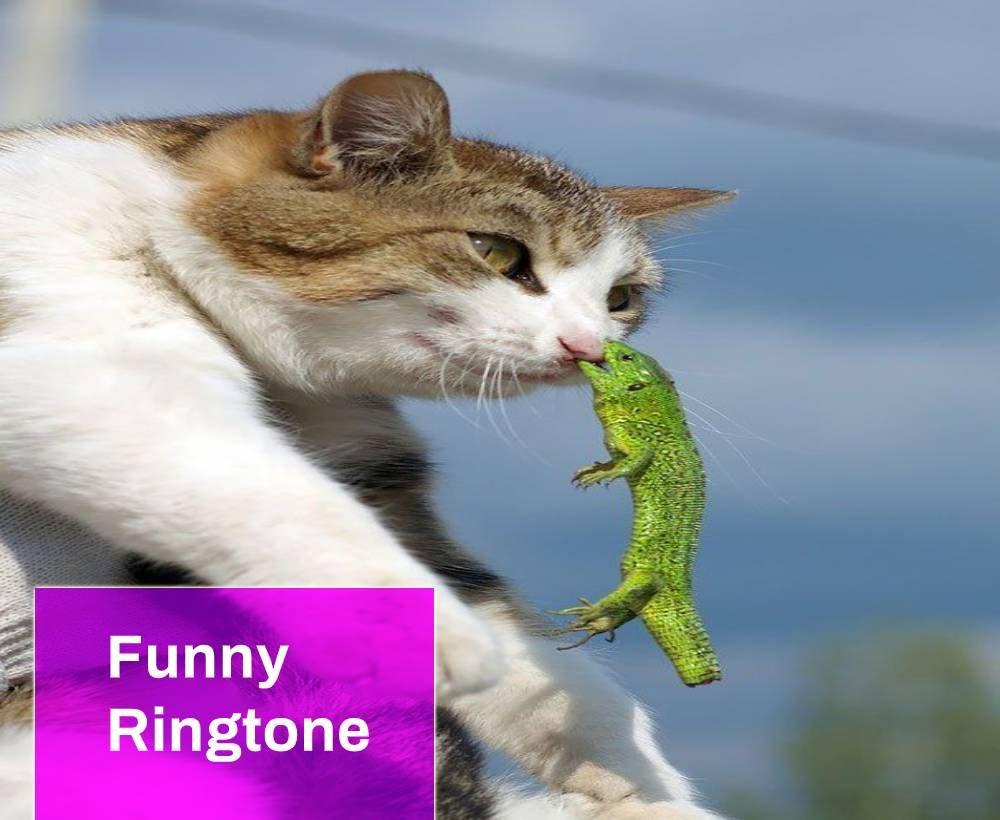 Funny Ringtone