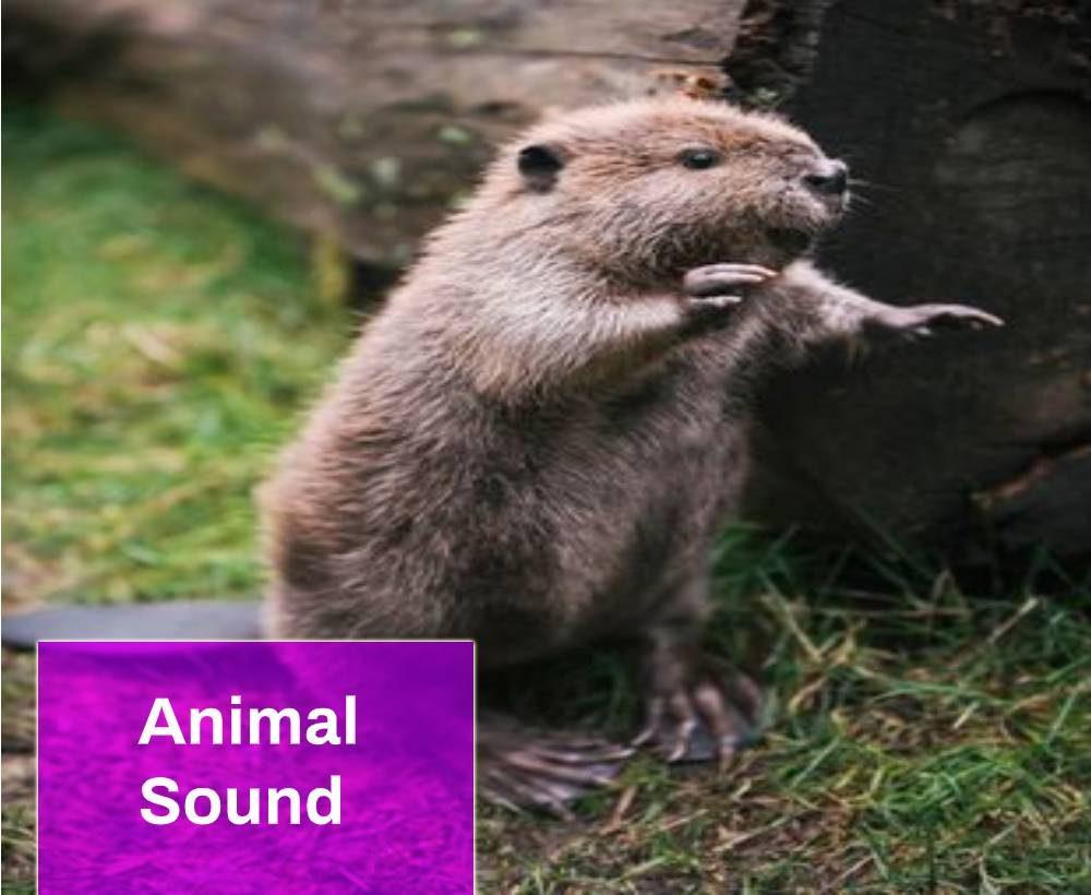 Beaver Sound