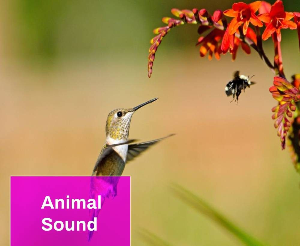 Sounds of Bees and Birds