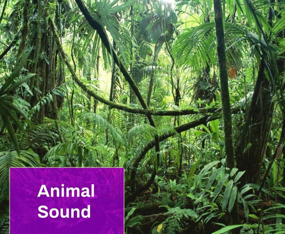 Rainforest Atmosphere Sound