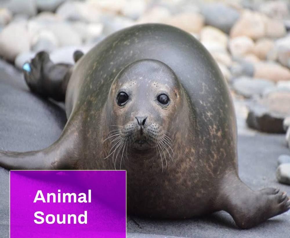 Seal Sound