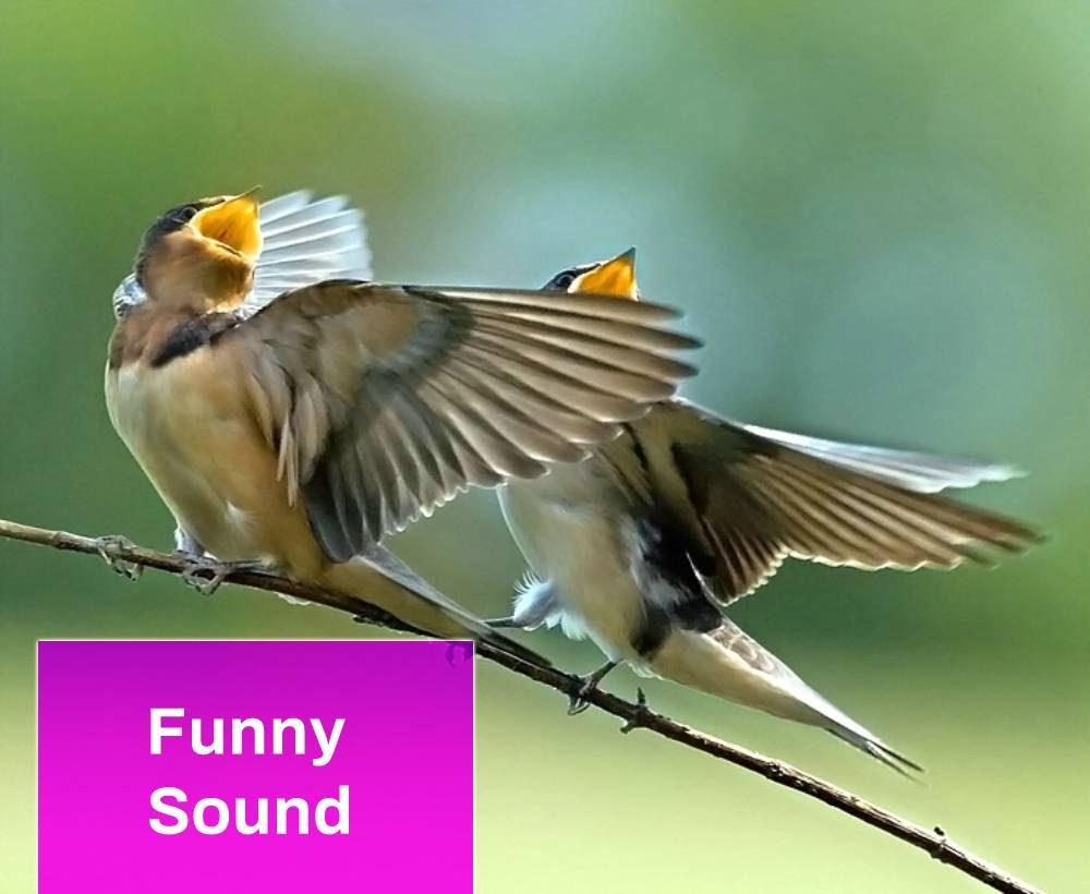 Little Bird Chirp Sound