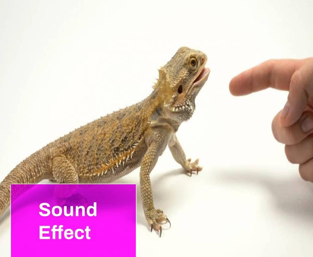 Dragon Bite Sound Effect