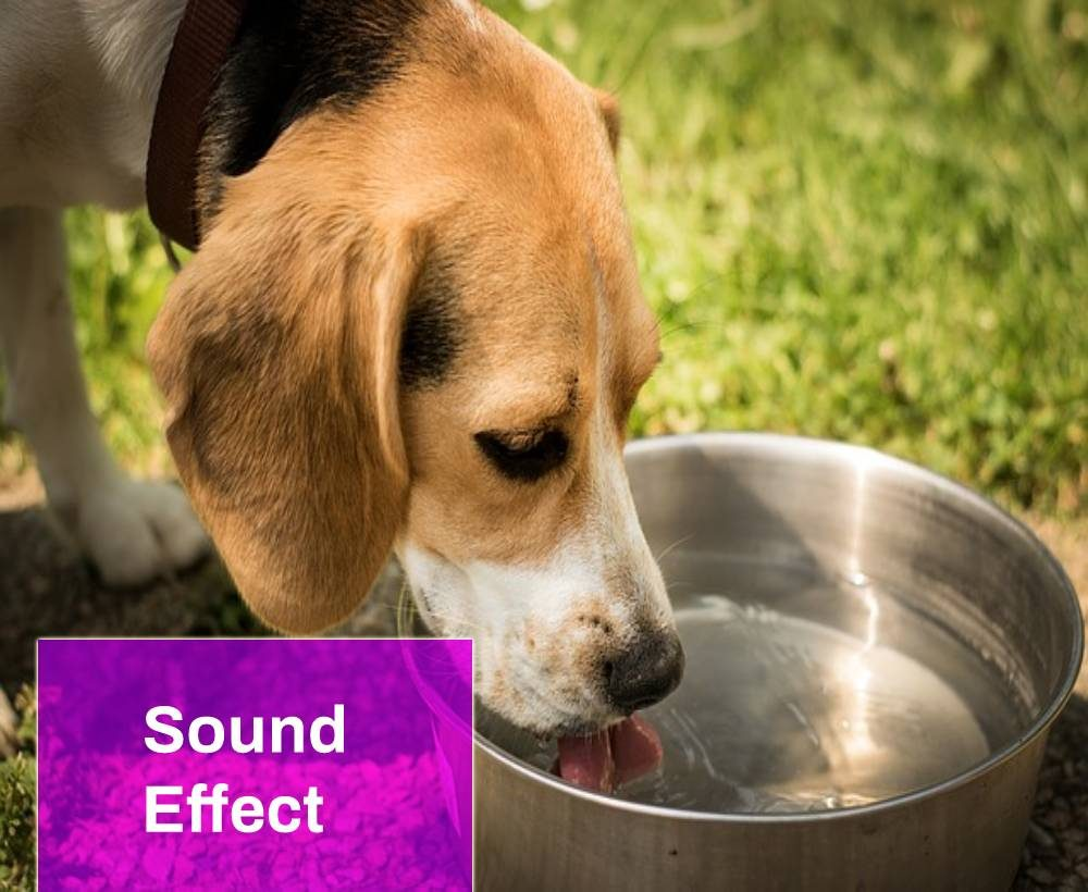 Dog Is Drinking Sound