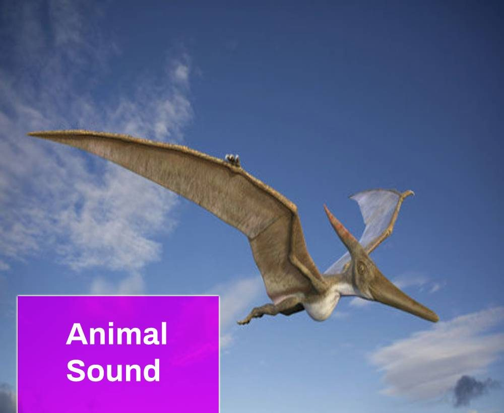 Pterodactyl Bird Sound