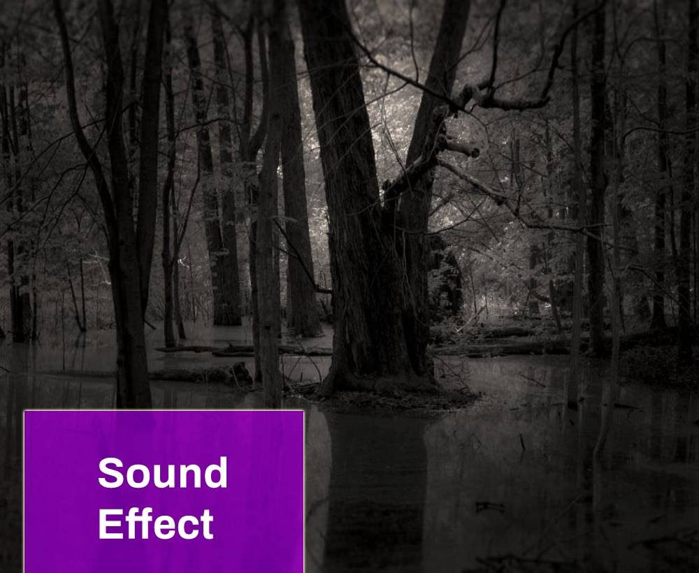 The Sounds of the Swamp at Night