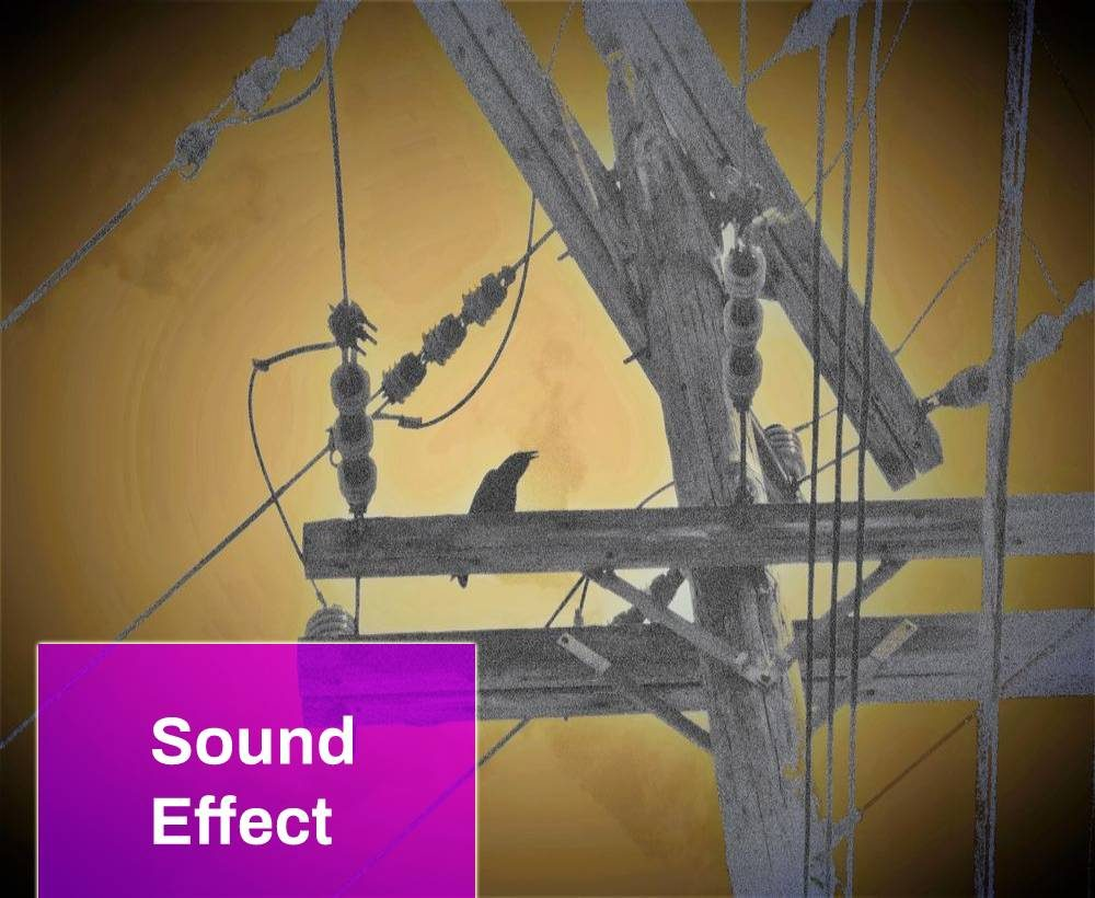 Techno Bird Sound