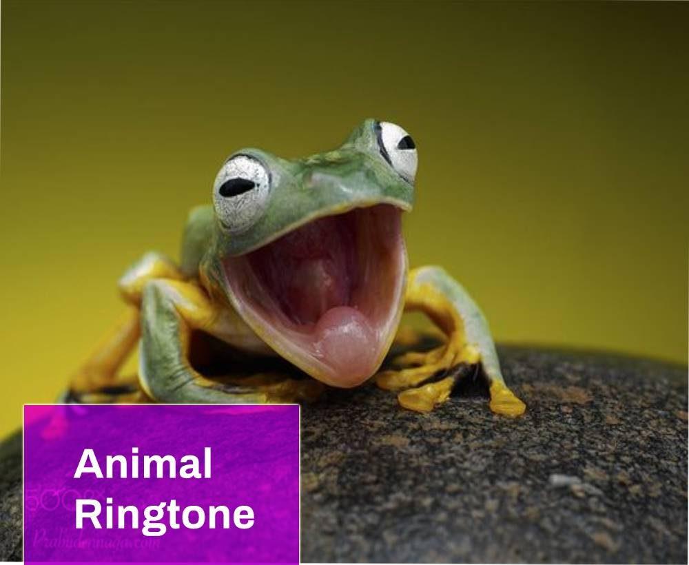Frog Wav Ringtone