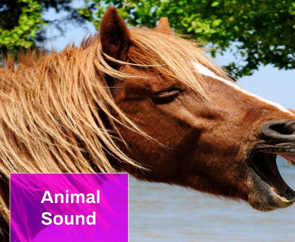 Horses Sound Effect