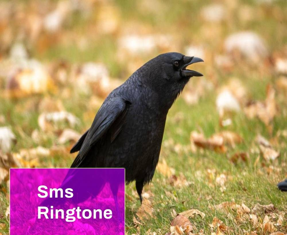 Crow Sms