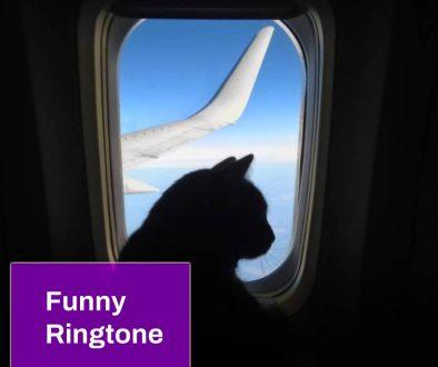 Magic fly by Cats Ringtone