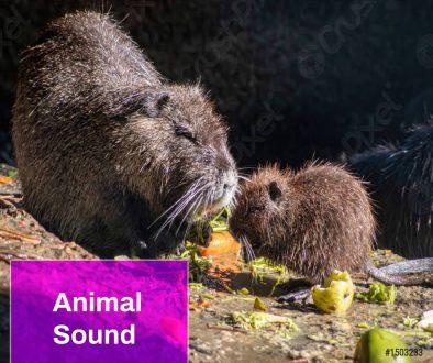 Coypu Animal Sound
